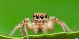 Spider eyes encourage depth sense camera | iTMunch