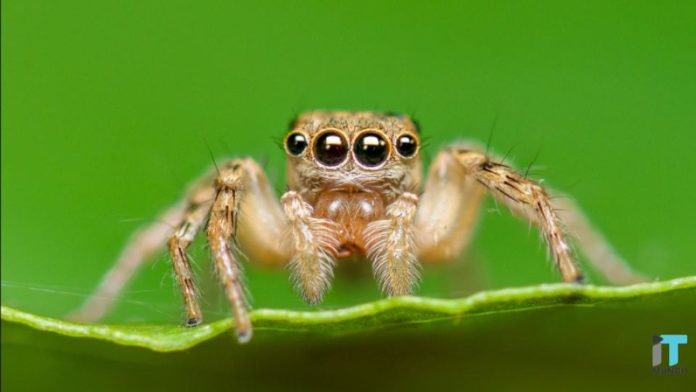 Spider eyes encourage depth sense camera | iTMunch